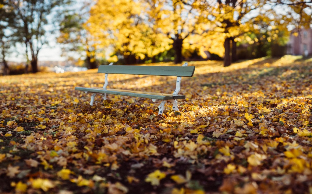 Bench in amongst the autumn leaves