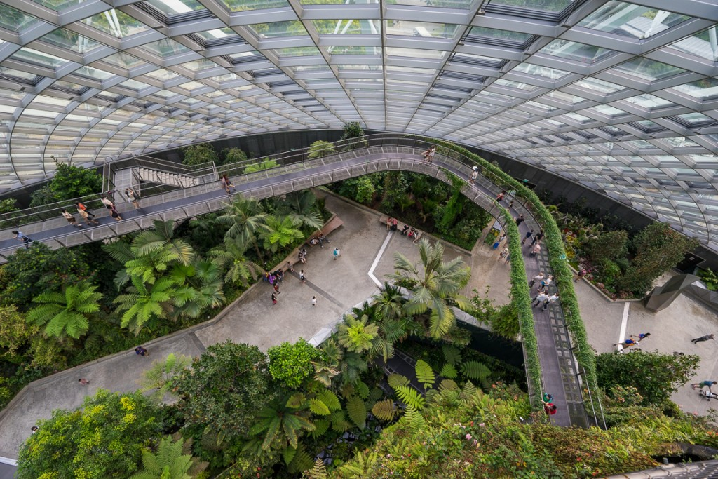 Looking down to the walkways of the cloud forest
