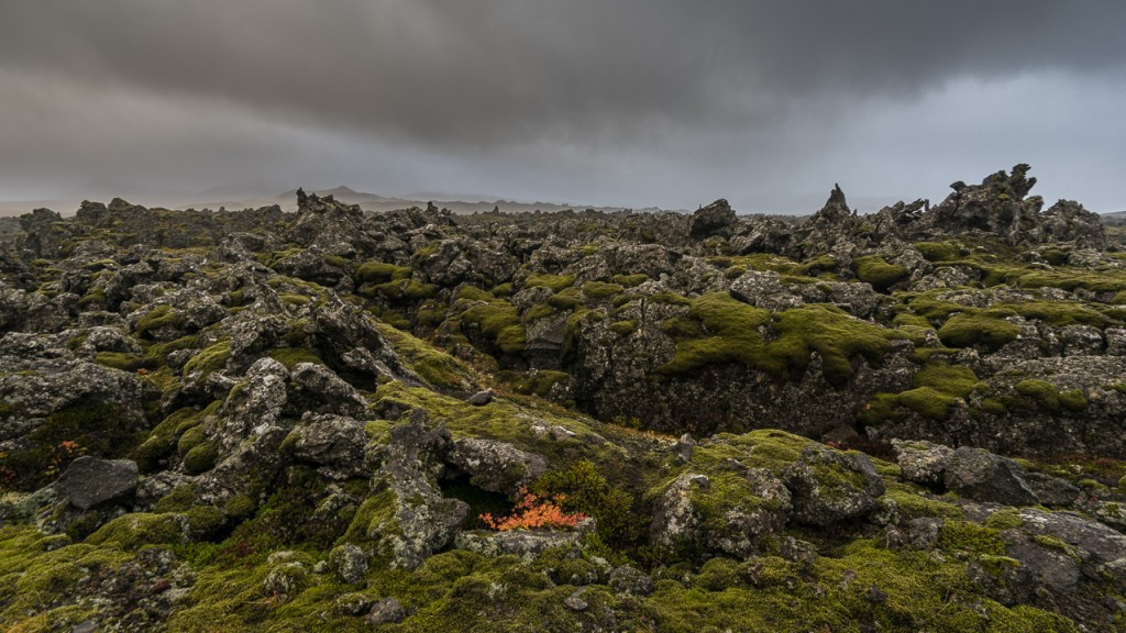 Rough lava field with moss, Snaefellsnes